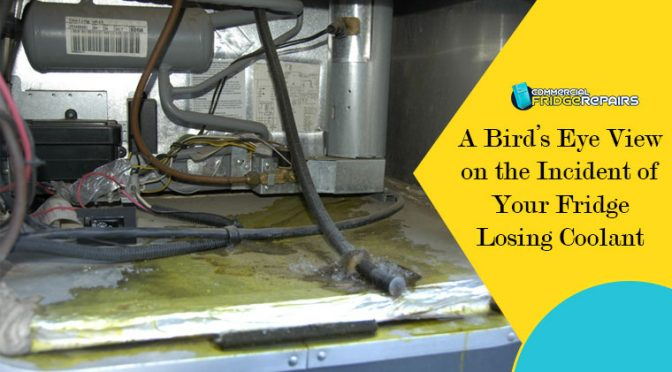 A Bird's Eye View on the Incident of Your Fridge Losing Coolant